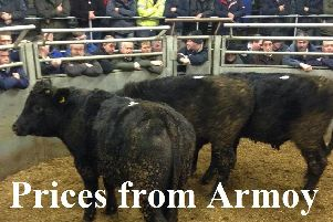 Armoy Mart spring show and sale of Charolais and Limousins