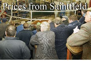 Fat cows sell to £1,176 for 700kg at Saintfield Mart