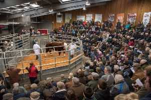 New buyer bonus at premier Hereford sale
