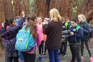 A group of school children enjoying the new nature trail in Castlewellan Forest Park funded by The Woodland Trust's Tree of the Year Award