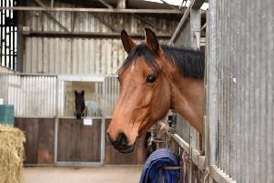 CAFRE have announced a range of equine training events for autumn and winter