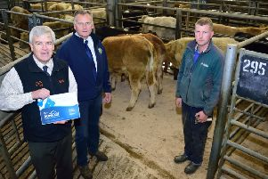 Richard McGinley, right, with his pen of Surecalves. Also included are Sam McNabney, second left, Ballymena Mart while Patrick MacFarlane, Zoetis highlights the Surecalf ear tags and certificate