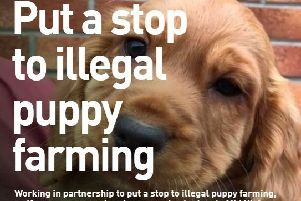 'Paws for Thought' before you buy a puppy