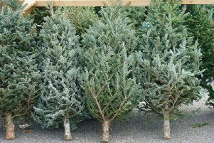 Where will you be buying a Christmas tree this year?