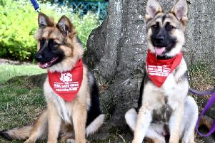 German Shepherd puppies Saffire and Molly had suffered serious injuries before coming into the charity's care