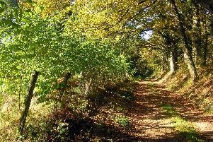 'A leafy lane that meandered up a hill'