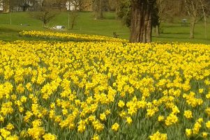 And it was all yellow: Spring has well and truly sprung as this beautiful scene near Gadebridge Park proves.The picture was taken by Mark Batchelor, keep your pictures coming in!