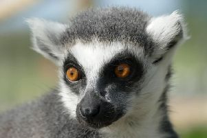 The eyes have it:  One of the park's smaller residents