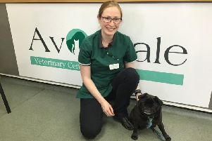 Bella with Katie Wain, clinical director at Avonvale Veterinary Centres.