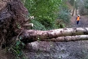 The fallen tree. Photo by Warwick District Council