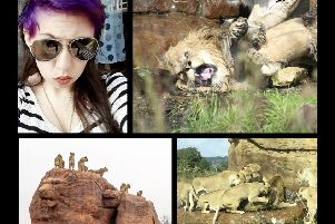 An amateur photographer from Kenilworth caught vicious lion attack on camera
