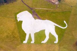 The icoinc white lion has been restored at ZSL Whipsnade Zoo. Photo by Whipsnade Zoo / ZSL