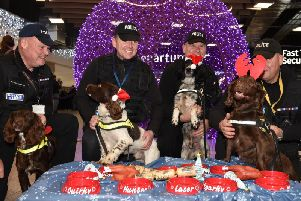 Police Dogs, Chip, Laser, Milo and Poppy at London Luton Airport Police Dog party. Photo by Jane Russell