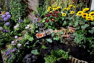Garden top tips for the new year