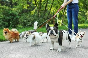 Join in with the fundraising dog walk in Worthing