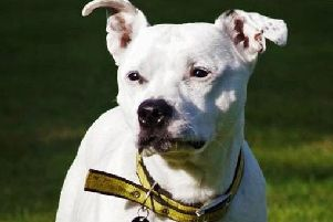 Rosie is Dogs Trust Shoreham's dog of the week