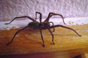 House Spider SUS-150826-153822001