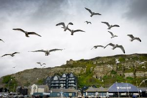 Seagulls in Hastings.'Hastings file photo SUS-181218-121354001