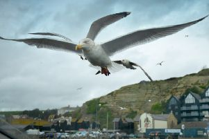 Seagulls in Hastings.'Hastings file photo SUS-181218-121330001