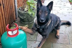 The work of a police dog has led to the conviction of three men who stole a large number of gas canisters from a caravan park, according to Sussex Police. SUS-191127-172517001