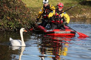 An injured swan has been rescued by the RSPCA and Chichester Canal Trust after a rescue mission lasting several hours. Another swan, also injured, was not rescued before it turned dark so officers will continue their efforts tomorrow (Friday, November 28)