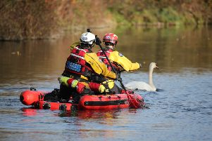 A rescue mission was launched at Chichester Canal this afternoon (Thursday, November 27), after two swans were found shot. SUS-191128-164441001
