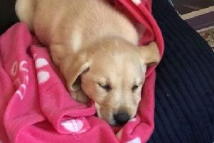 Maggie the golden Labrador puppy died days after her owner Grace Piper from Worthing bought her