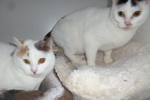 Worthing Cat Welfare Trust is looking for a new home for Mavis and Margo