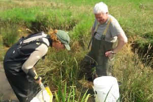 Surveying the crayfish's new home in a chalk stream in the Wolds.