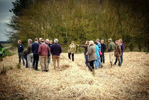 Miscanthus farm walk.