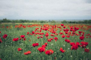 Poppy field. Photo by Elina Sazonova
