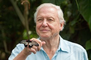 Sir David Attenborough is encouraging residents in Lincolnshire to take part in The Big Butterfly Count. Picture: Helen Atkinson/Yellowsnapper. EMN-180719-141713001