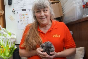 Laurie Fox and Ruby Roo, who arrived at the Caistor centre when she was just three days old EMN-190901-161315001