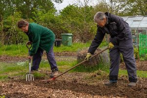 Allotments are in demand