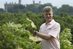 Pev Manners, managing director of Belvoir Fruit Farms, assesses the elderflower.
