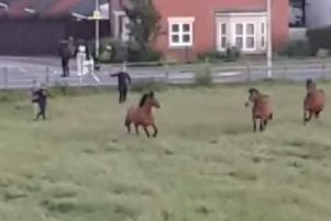 A still from the video posted on social media showing youth chasing horses and throwing items at them in a field at the Defence Animal Training Regiment HQ in Melton EMN-190307-102226001