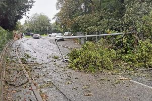 The fallen tree and street light which dropped on a car being driven up Ankle Hill in Melton EMN-190110-174637001