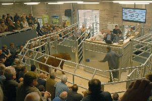 The auction ring in use at Melton Cattle Market EMN-191125-112827001