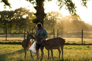 Sky Park Deer Farm manager Dominic Strutt feeds deer