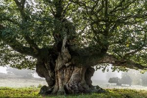 An exhibition of award-winning photographs of the nation's favourite trees will be launched on 31st January amongst the oaks at Wakehurst in Ardingly, West Sussex before touring the UK throughout 2019. q.139a