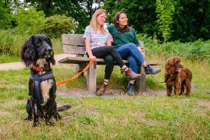 For the first time ever Wakehurst are trialing dog friendly walks in September