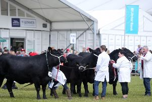 Press Eye - Belfast - Northern Ireland - 17th May 2019''Day three of the Balmoral Show in partnership with Ulster Bank at Balmoral Park outside Lisburn.  Cattle showing at the show. ''Picture by Jonathan Porter/PressEye