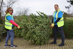 Volunteers collected the trees