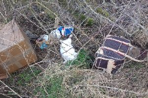 Photograph showing dead rabbits at Carrickfergus roadside (centre and far right).  INCT 12-725-CON