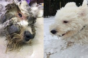 Before and after: one of the dogs saved by NI rescuers from slaughter in China