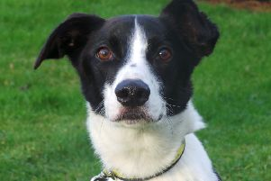 Dogs Trust Ballymena hosts annual Fun Day on May 11 which will help raise funds for  the continued care of residents at the Rehoming Centre like Banjo (pictured).