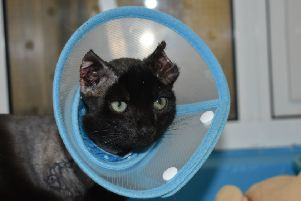 Inky is on a long road to recovery.'Pic credit: cats-protection