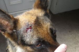 Man was fined for failing to seek vet's help with a dog which had suffered a head injury