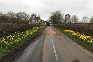 Daffodils at the Ballylagan Road entrance.