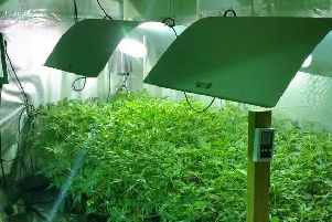 Cannabis farm found in Rushden